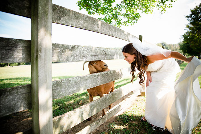 Goat and a Bride