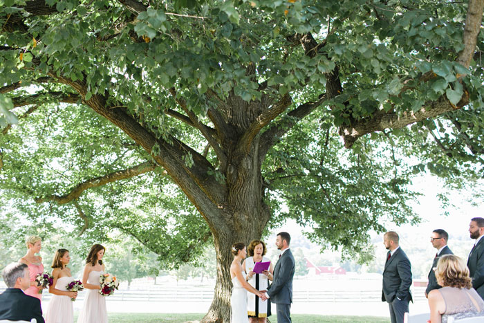 Tying the Knot Under Beautiful Tree
