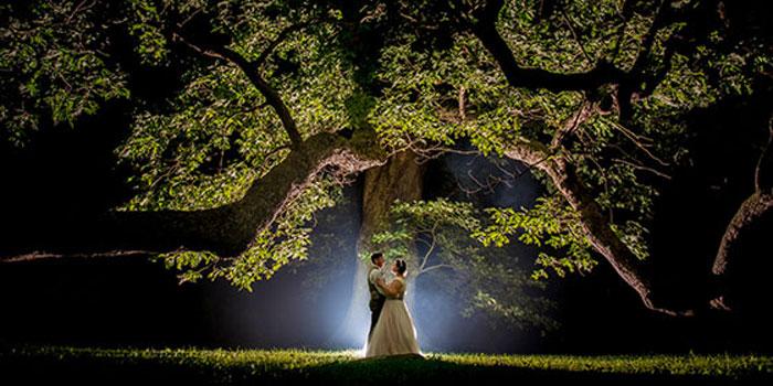 Linden Tree Lighting