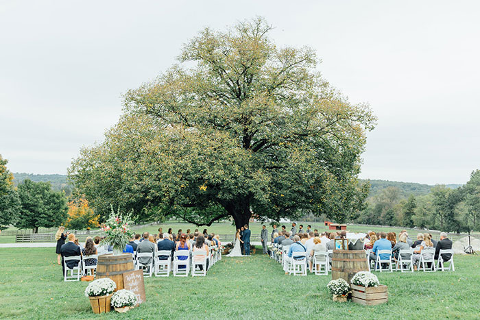 Wedding Ceremony Under Farm Linden Tree