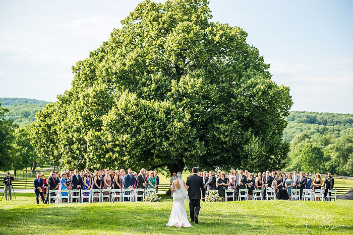 Linden Tree Wedding Ceremony